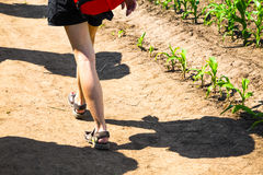 Shadow and legs of a woman walking near corn plants Royalty Free Stock Photo
