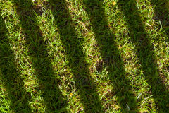Shadowy lines on grass Royalty Free Stock Images