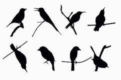 Shadow of little birds. On white background Royalty Free Stock Photography