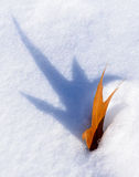 Autumn leaf buried in white snow. Shadow lone Leaf in Snow Midwest Illinois Royalty Free Stock Photography