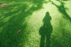 Shadow of lonely woman. On the fresh green yard in the city park Stock Image