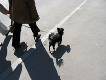 Shadow. Look on top of a dog's life Royalty Free Stock Photos