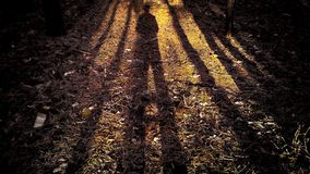 The shadow of a man in the forest with the shadows of the trees stock photography