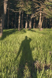 Shadow man on grass. At the sunset in the forest Stock Photo