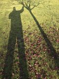 Shadow of man shaking tree. The shadow of a man shaking tree on green grass with some autumn foliage stock photos