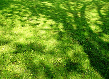 Shadow meadow. Sun reflects tree Royalty Free Stock Image