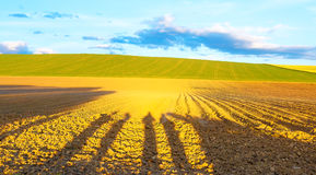 Shadow of a men on a brown plowed field at sunset. Royalty Free Stock Images