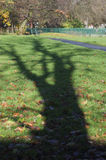 Shadow of oak tree Disley, Stockport, Darbyshire England Lyme Pa Royalty Free Stock Photography