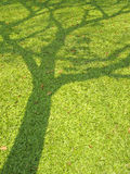 Shadow Of Big Tree Royalty Free Stock Photo