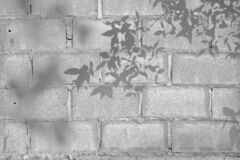 Free Shadow Of Leaf Tree On Block Cement Wall - Black And White Gray Background Stock Photo - 198396260