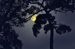 Shadow of old big tree in full moon night Stock Images