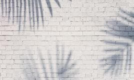 Shadow of palm on brick wall stock image