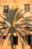 Shadow of a palm tree Royalty Free Stock Photography