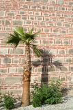 Shadow of palm tree on old stone wall, Dzhumaya Mosque, Plovdiv, Stock Photo