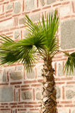 Shadow of palm tree on old stone wall, Dzhumaya Mosque, Plovdiv, Royalty Free Stock Images