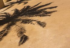 Shadow of a palm tree in the sand stock image
