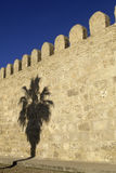 Shadow of palm tree- Tunisia Royalty Free Stock Photography