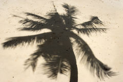 Shadow of palm trees Royalty Free Stock Photo