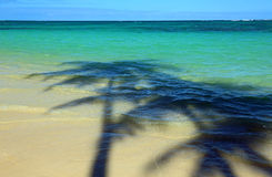 Shadow of palm trees Stock Images