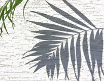 Shadow on the palms Royalty Free Stock Photography