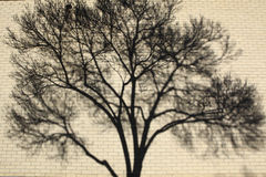 Shadow patterns of tree branches on a wall/ Blurred background of a wall with tree shadow on it. Royalty Free Stock Photo