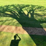Shadow of a person taking a photo of a shadow of a tree. Shadow of a person taking a photo with a mobile phone of a shadow of a large oak tree Stock Image