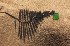 The shadow of the plant on yellow sand beach with a piece of gre Royalty Free Stock Image