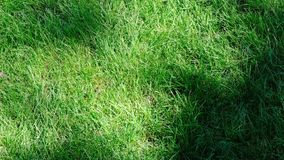The shadow of the plants. Falls on a beautiful green grassy lawn on a summer sunny day, filmed using zooming and moving the camera stock video