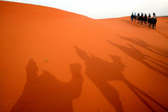 Shadow play. Camel trekking in the sahara desert Stock Photography