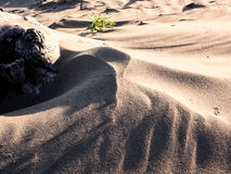 Shadow play on sand dune Royalty Free Stock Photography