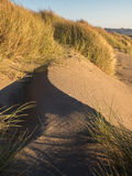 Shadow play on sand dune Stock Images