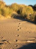 Shadow play on sand dune Stock Photos
