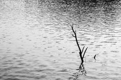 Shadow of pond Stock Photos