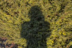 Shadow portrait Stock Photos