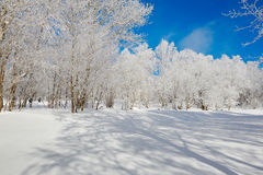 The shadow and rime on the snowfield Royalty Free Stock Image