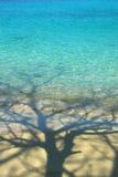Shadows tree at sea Royalty Free Stock Photography