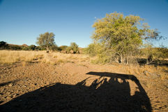 Shadow of a Safari jeep with tourists in African landscape. Stock Photo