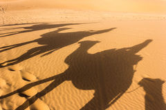 Shadow in the Sahara. Desert stock photos