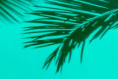 Shadow silhouette of beautiful feathery palm leaf in sunlight on soft green turquoise color wall background. Summer tropical stock photography