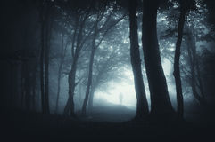 Free Shadow Sneaking In The Dark Forest Royalty Free Stock Image - 24060606