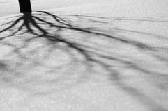 Shadow on the snow. The shadow of the tree on the snow. black and white capture Royalty Free Stock Photos