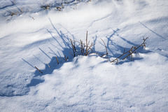 Shadow in the snow a tussock Royalty Free Stock Image