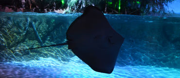 Shadow of a Stingray Stock Photos