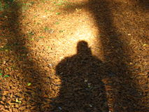 Shadow from the sun Royalty Free Stock Images