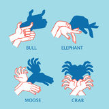 Shadow Theater. Hands gesture like flying bird. Vector illustration of Shadow Hand Puppet. Stock Images