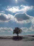 Shadow tree 2. Shadow of a tree in a field with snow Royalty Free Stock Photo