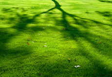 Shadow of a tree. The shadow of a tree on grass in a park during the summer Royalty Free Stock Photos