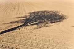 Shadow of a tree Stock Photos