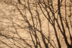 Shadow of tree Royalty Free Stock Images