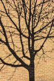 Shadow of a Tree on a Brick Building Stock Images